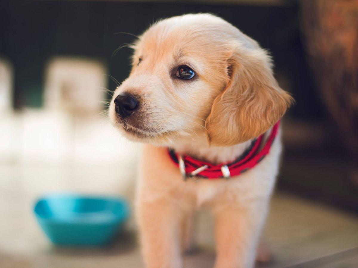 Foto: Dieta BARF, una forma natural de alimentar a tu perro. (Berkay Gumustekin para Unsplash)