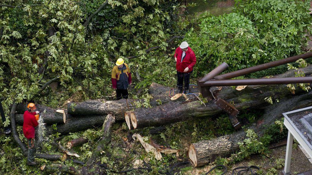 Foto: La tala indiscriminada es una de las causas del peligro de extinción de muchas especies (EFE/Marcel Antonisse)