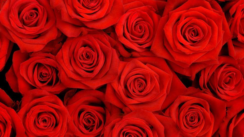 La biotecnología ha descubierto por qué ya no huelen las rosas