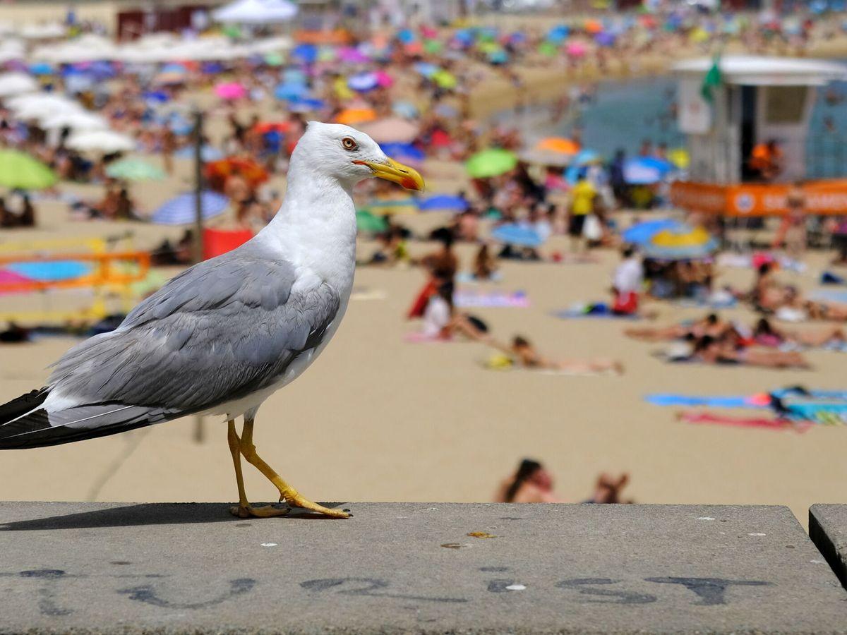 Foto: Playa en Barcelona. (Reuters)