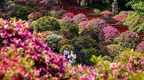 Parque de azaleas en Tokio