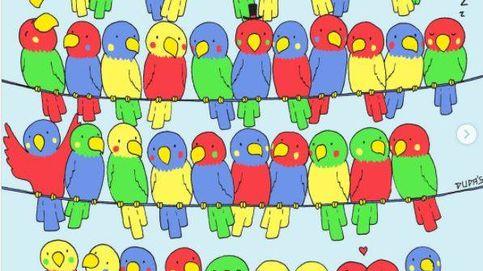 Acertijo viral: ¿eres capaz de encontrar al pájaro que no tiene pareja?
