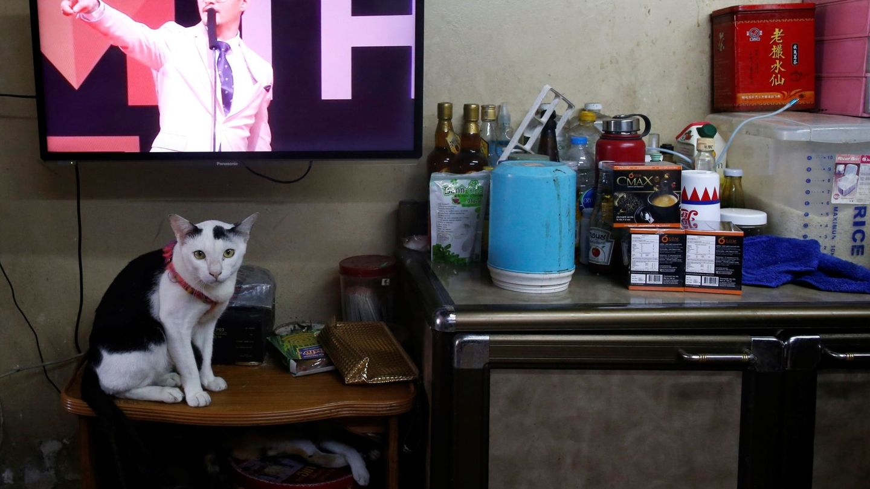 Un gato, sentado frente al televisor (EFE/Rungroj Yongrit)