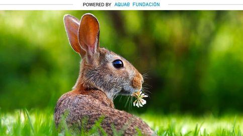 Los conejos tienen una función que cumplir: dispersar las semillas del campo