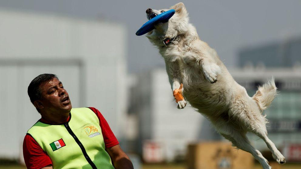 La unidad canina que guarda las calles de México