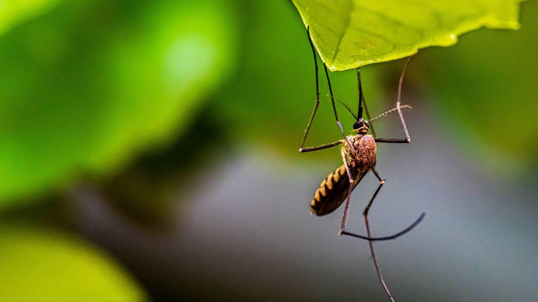 Las sequías extremas y la epidemia de dengue en Brasil que está por llegar