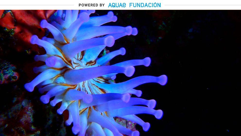 Este animal marino tiene 90 tentáculos y adopta hasta 25 colores distintos