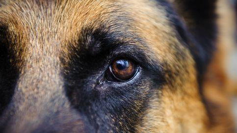 Escándalo en un pueblo de Murcia por un vídeo sobre maltrato animal