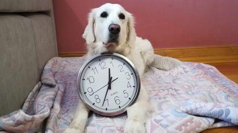 ¿Funcionan los piensos que ayudan a tu perro a prevenir su envejecimiento?