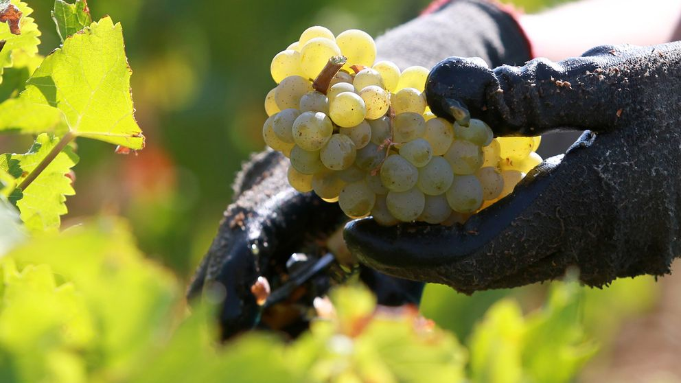 Maridajes vino a vino: Chardonnay