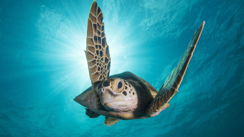 La conservación de la biodiversidad marina debe ser un objetivo de todos (EFE)