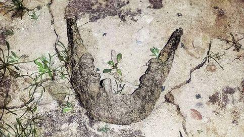 Una mandíbula emergida por la sequía resucita el 'caso Alcàsser' de Palencia