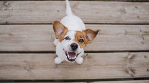 ¿Es tu perro superdotado? El test de las cuatro repeticiones
