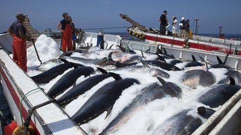 La AN investigará la organización criminal del atún rojo ilegal