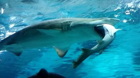 Una mujer embarazada salta al agua y salva a su marido del ataque de 1 tiburón
