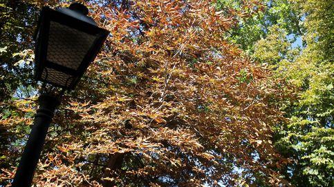 Muere un niño de 4 años tras caerle un árbol encima en el parque de El Retiro