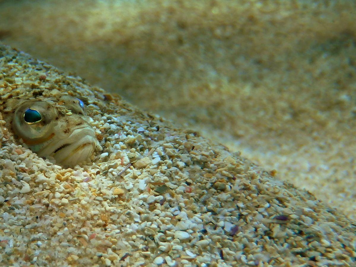 Foto: Un pez araña
