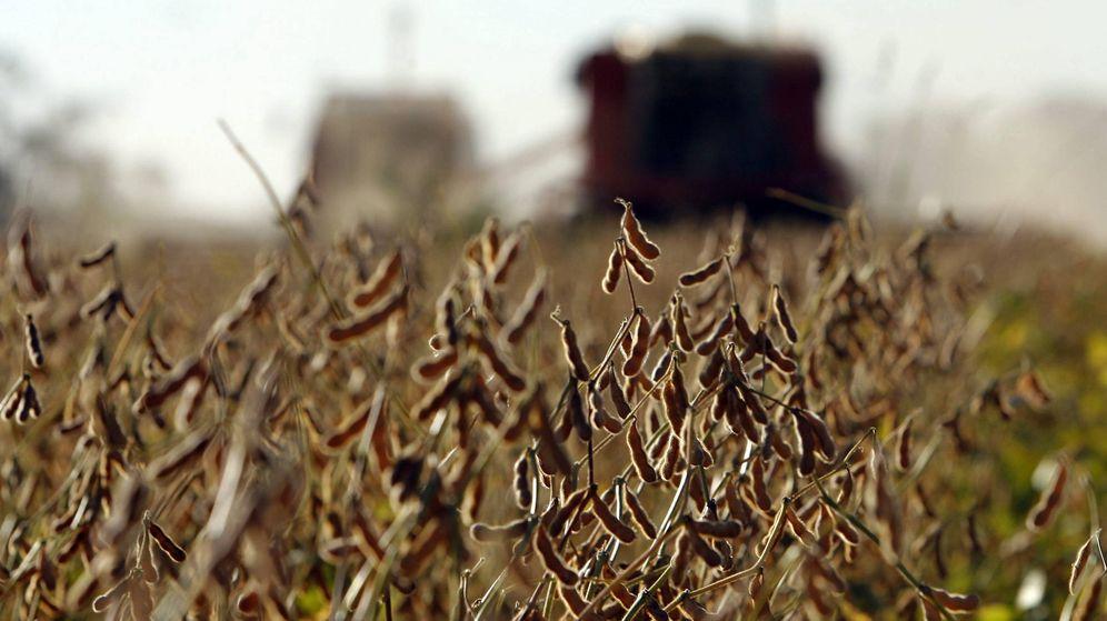 Foto: Un sembrado de soja. (EFE)