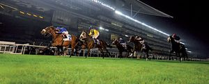 ¿Crisis? Un príncipe árabe reparte 27 millones en cinco horas a los mejores caballos del mundo