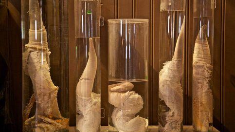 Los 20 museos más raros del mundo: desde una 'faloteca' en Islandia al de Alien en Suiza