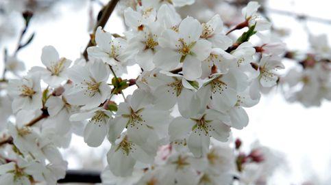 Explosión de primavera en Washington