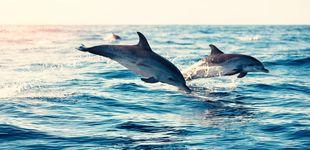Post de Las misteriosas muertes de delfines y los detectives que las están resolviendo