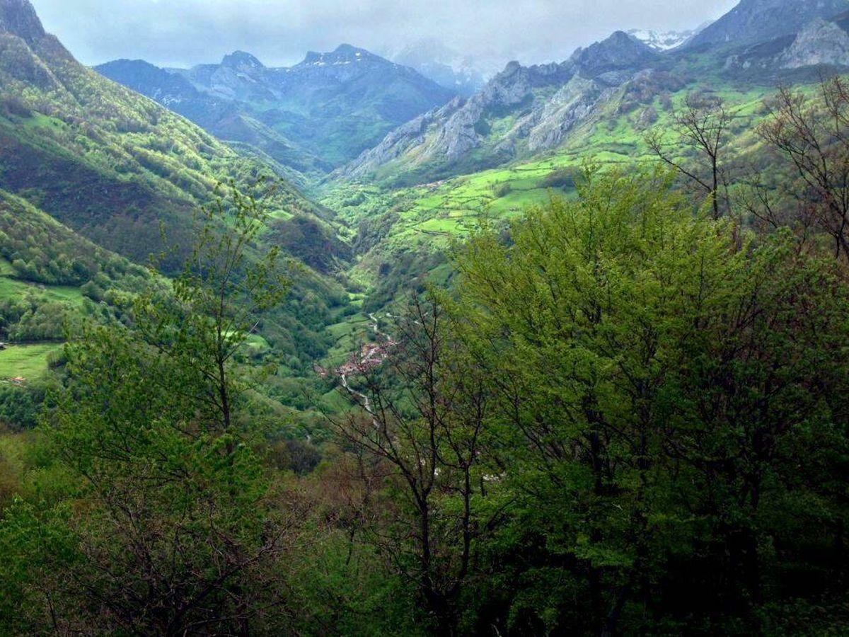 Foto: Los paisajes con bosques mixtos guardan un gran valor. (José Luis Gallego)