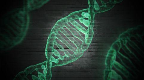 Encuentran un gen que protege frente a la muerte celular en pacientes con ELA y AME