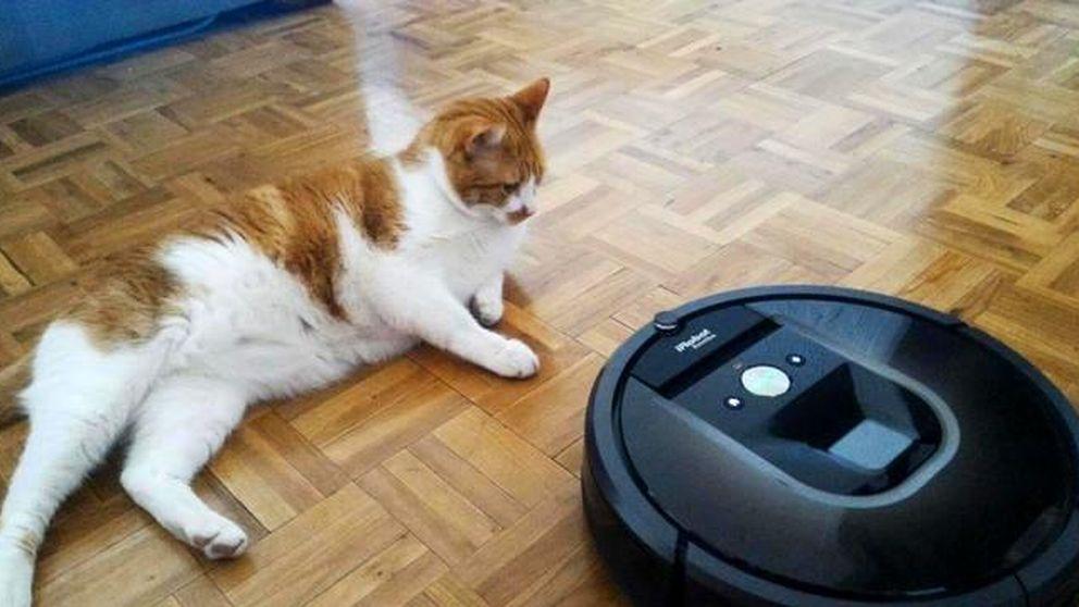 Una aspiradora robótica es el peor enemigo de mi gato