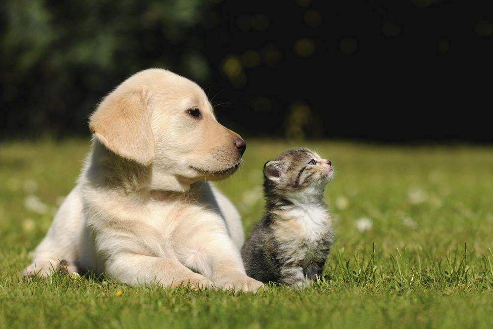 Foto: La natalidad se desploma y el número de mascotas crece.