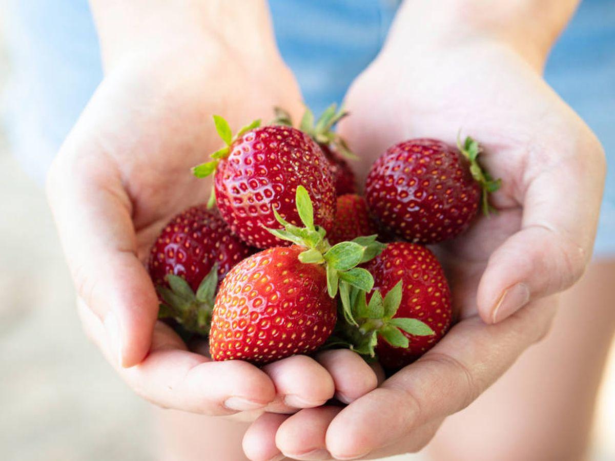 Foto: Las fresas son una de las mejores frutas para adelgazar (Casey Chae para Unsplash)