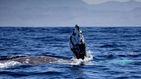 Biólogos se adentran en el corazón del animal más grande del mundo
