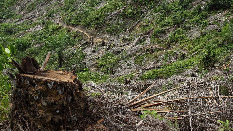 Una de las colinas en el distrito de Aceh Tamiang donde el equipo de Rudi Putra ya ha desmantelado una plantación ilegal. (L. Villadiego)