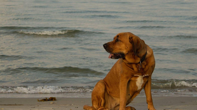 Playas para perros en España. (Casper Pedersen para Unsplash)