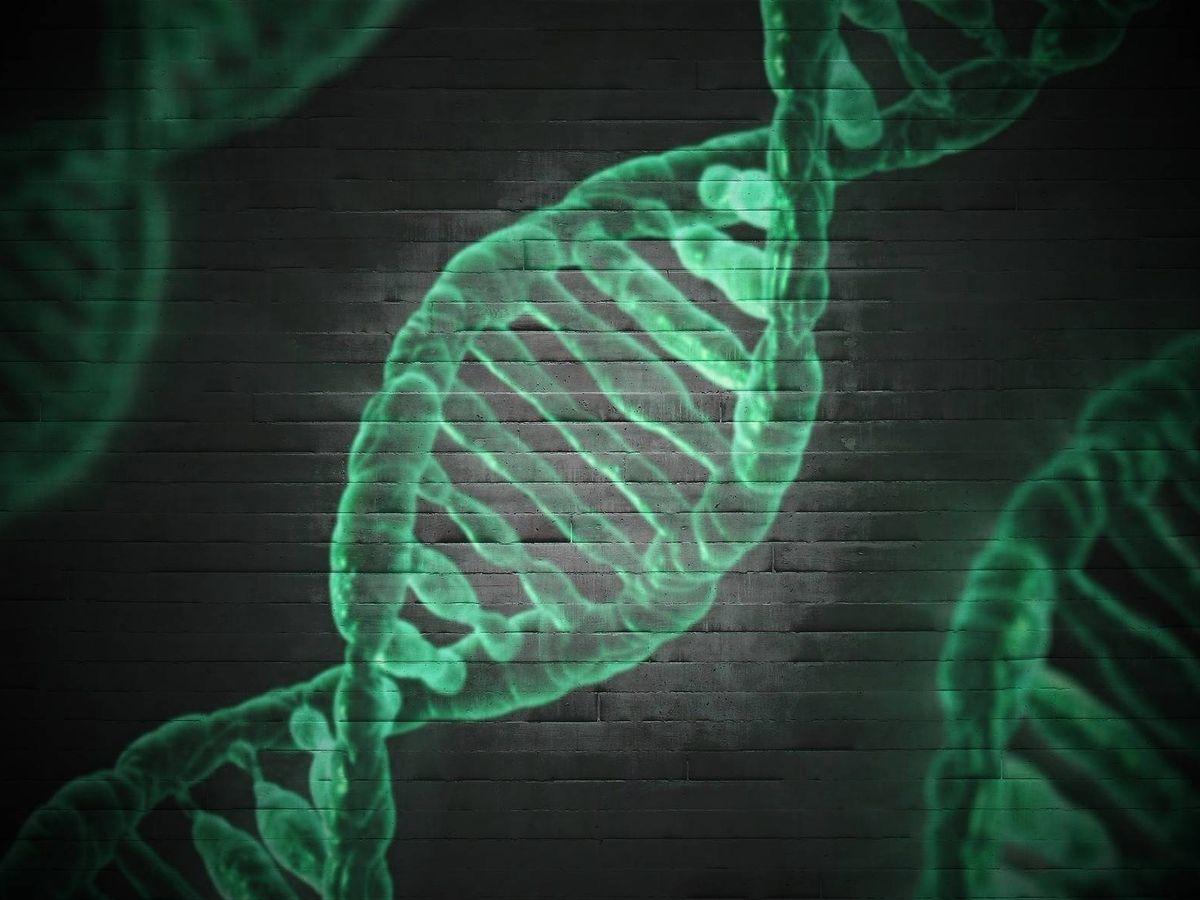 Foto: Investigadores internacionales encuentran un gen que protege frente a la muerte celular en pacientes con ELA y AME. (Unsplash)