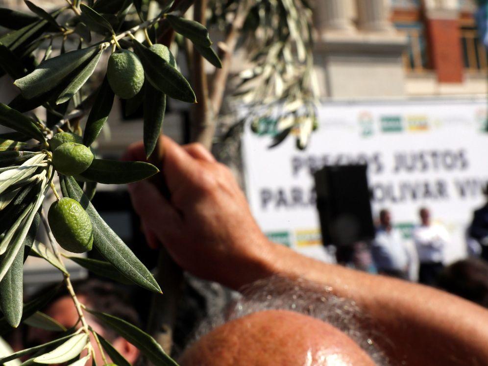 """Foto: Un hombre sostiene una rama de olivo durante la manifestación bajo el lema """"Precios justos para un olivar vivo"""" que se celebró este jueves en Madrid. (EFE)"""