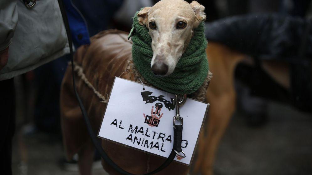 Foto: El galgo afectado habría ingerido la misma carne que su familia, que está hospitalizada por el brote (EFE/Javier Lizon)