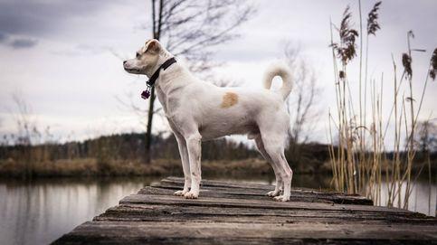 Un perro evita que un cervatillo muera ahogado en un lago de Virginia