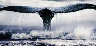 Post de La maldición de Herman Melville: cómo 'Moby Dick' le hundió en vida