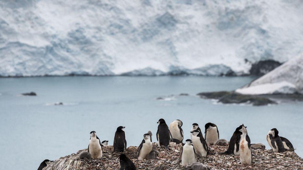 Foto: Pingüinos en la Antártida. (Reuters)