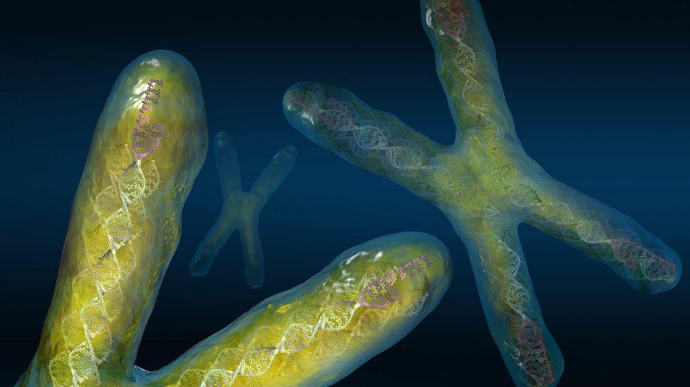 Foto: Los telómeros, en el extremo de los cromosomas, podrían ser la clave para acabar con el cáncer. (Corbis)
