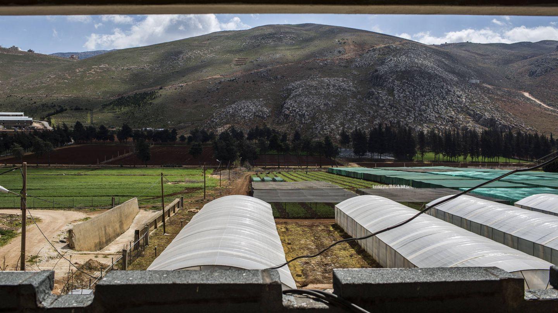 Imagen de las instalaciones del ICARDA en Tebor, Líbano. (D.I. Sánchez)