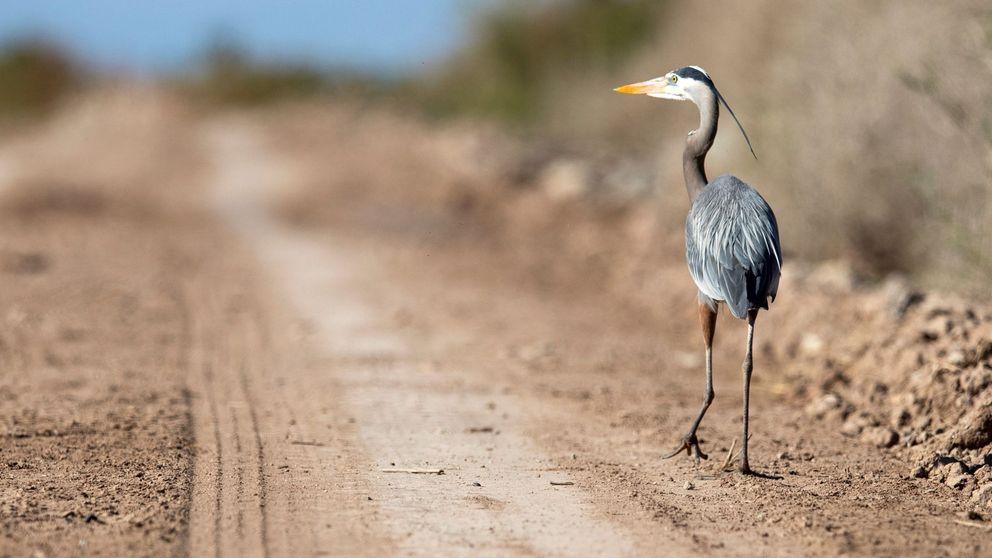 Hay un millón de especies en peligro de extinción por culpa de los humanos