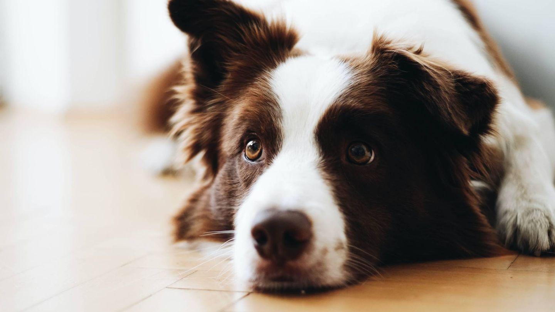 Casa limpia y perro feliz. (Anna Dudkova para Unsplash)