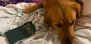 Post de Evita que su dueña viaje a Wuhan comiéndose su pasaporte