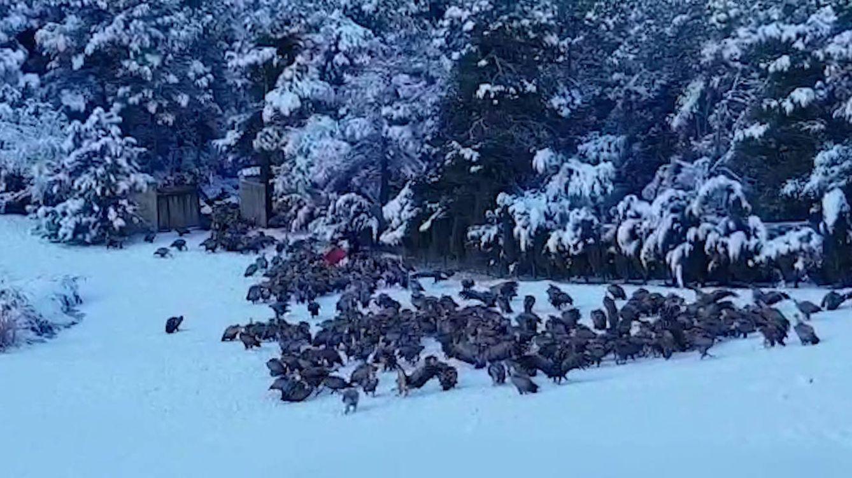 Ni el frío y la nieve pueden con Buitreman