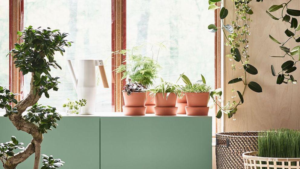 Jardinería de ventana: otras opciones para (su)plantar al árbol de Navidad