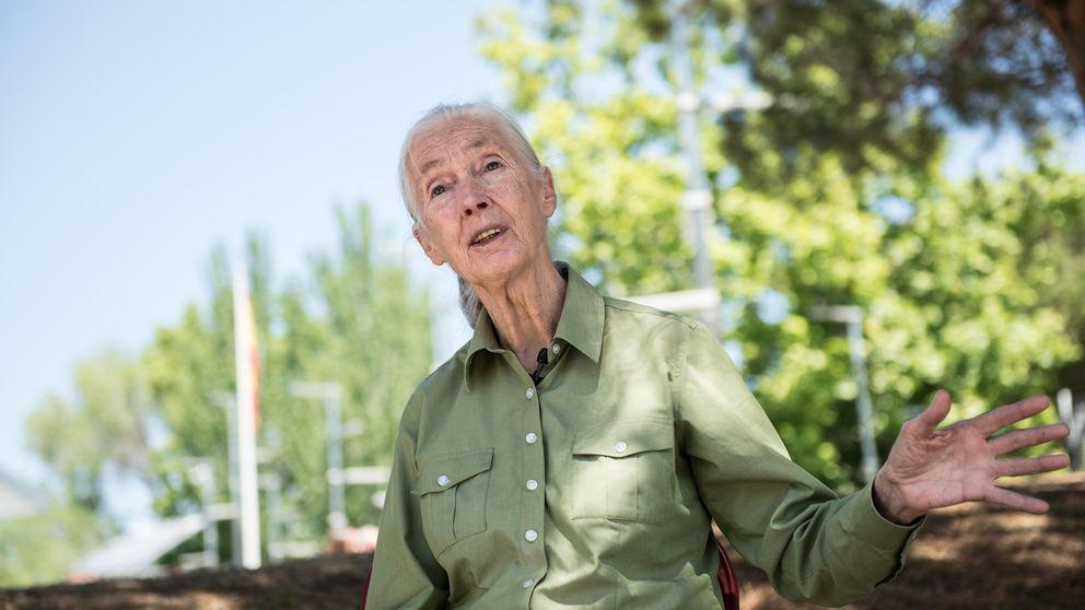 Jane Goodall: Es arrogante pensar que somos diferentes de los chimpancés