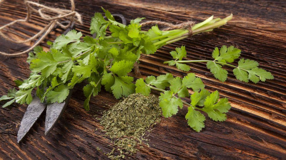Los beneficios insospechados del cilantro, una verdura diferente
