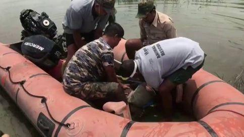 Rescatan del agua a un pequeño rinoceronte en la India